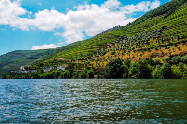 Vineyards and winery in the Douro valley