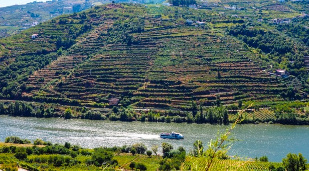 Vineyards and ship on the Douro river in Douro Valley