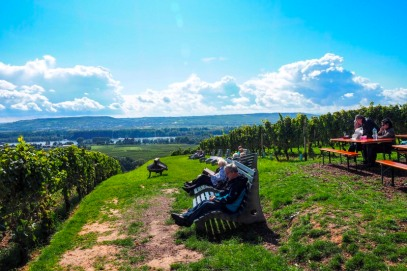 a vineyard in Rheingau, Germany