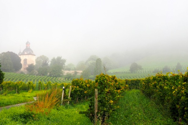 a view of Schloss Vollrads in Rheingau in the morning fog