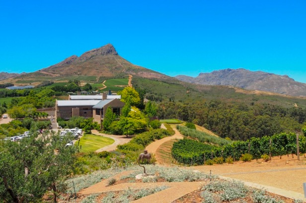 a view at Tokara wine estate in the Western Cape Winelands