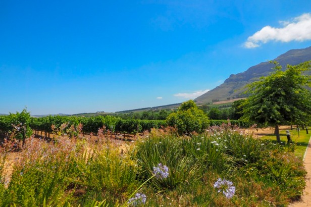 vineyards and mountains in the Western Cape Winelands