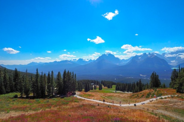 view from Mount Whitehorn in Jasper National Park