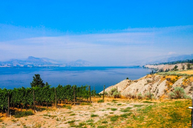 Lake Okanagan and vineyards