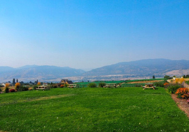 view over the picnic area at Misconduct Wine Co Lake Okanagan