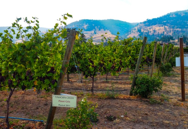 Tinhorn Creek Winery Lake Okanagan