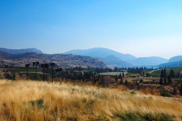 Lake Okanagan with vineyards