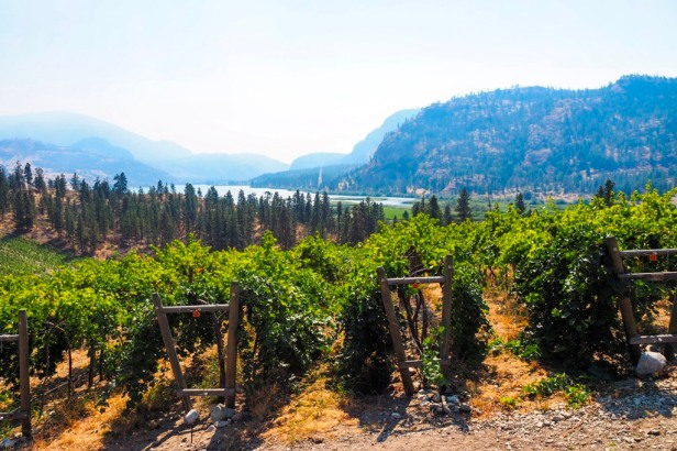 View from Noble Ridge Winery Lake Okanagan