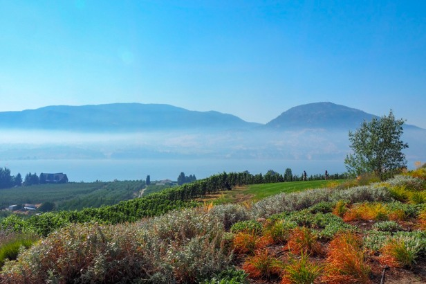 View from Serendipity Winery Lake Okanagan