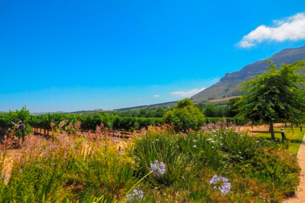Western Cape Winelands South Africa