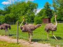 Mhou Ostrich Farm, Rülzheim, Germany