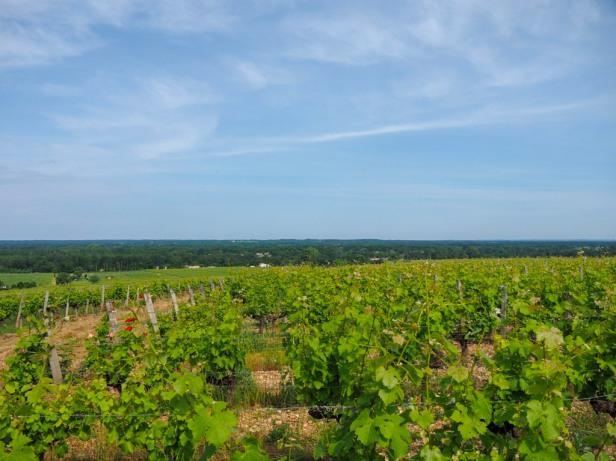 Sauternes, Bordeaux
