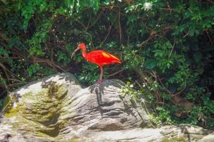 Birds of Eden, The Craigs, Garden Route