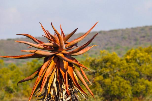 Klein Karoo, South Africa