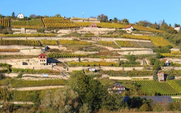 Saale-Unstrut vineyard