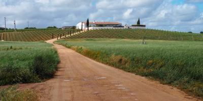 Alentejo wine region, Portugal