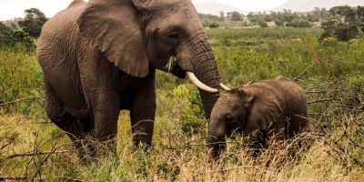 Essential guidelines for ethical wildlife travel