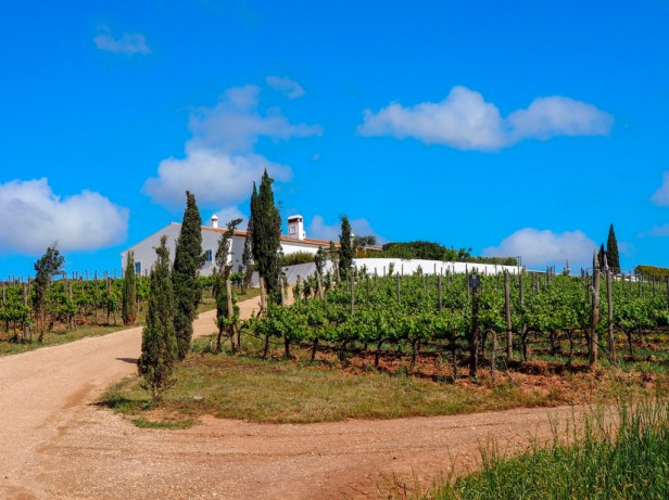 8 essential things to know before visiting a European wine region