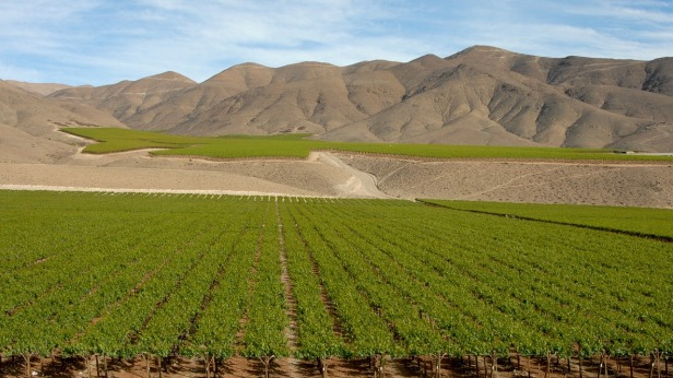 Chile vineyards