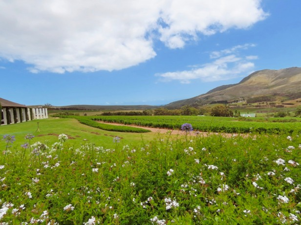 The wine region less travelled: A day in Hemel en Aarde Valley