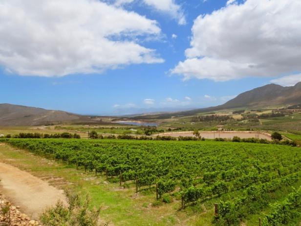 The wine region less travelled: A day in Hemel en Aarde Valley