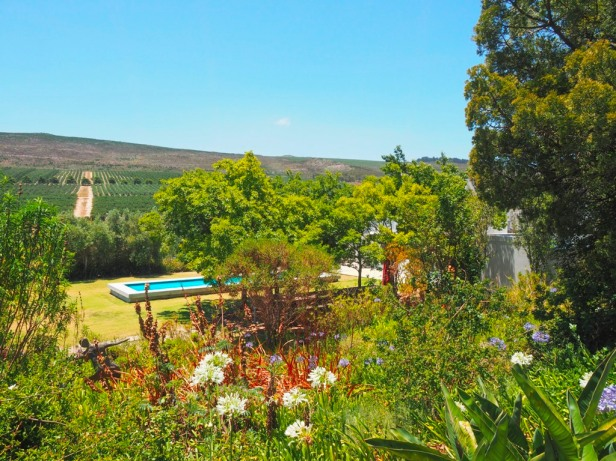 A wine lovers guide to Elgin, South Africa