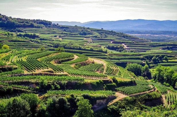 Kaiserstuhl vineyards, Black Forest, Germany