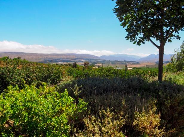Elgin Wine Valley