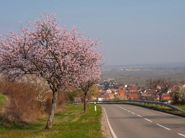 Pfalz wineregion, Germany